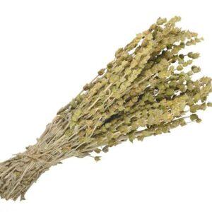 Τσάι Του Βουνού Βότανα Τονωτικό Ευστόμαχο - House Of Spices